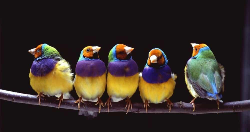 Twitter dans l'univers des banques et de la Fintech